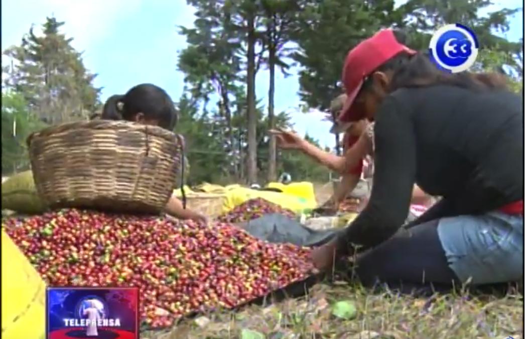 Buscan exportar café al mercado Chino